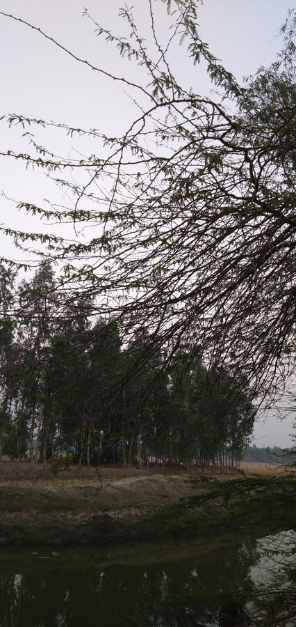 Sundarban village royalty free stock photography