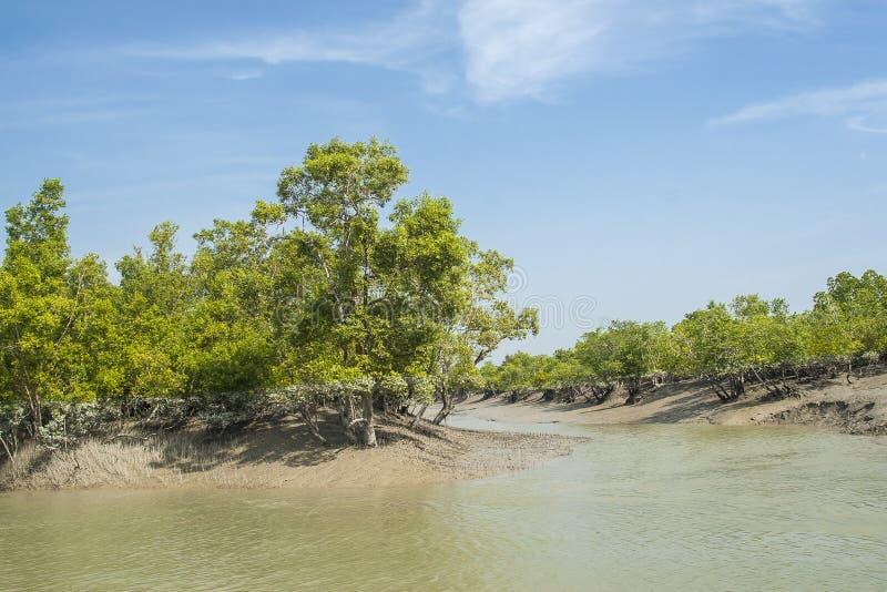 Sundarbansen arkivfoto