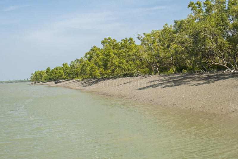 Sundarbansen arkivbilder