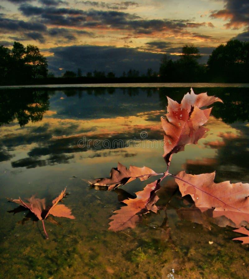 Sundawn bij het meer met bladeren royalty-vrije stock afbeeldingen