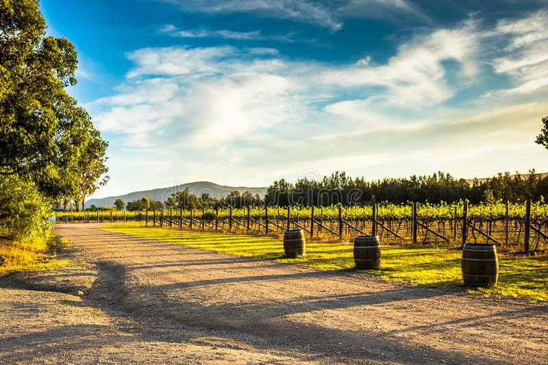 Sunday afternoon wine and dine. Beautiful afternoon in the Hunter Valley, wining and dining at its best stock photos