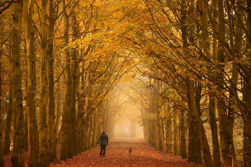 Sunday morning walk in autumn royalty free stock photo