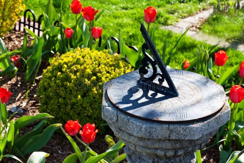 Sundial in the garden. Sundial in a garden of red tulips stock photos