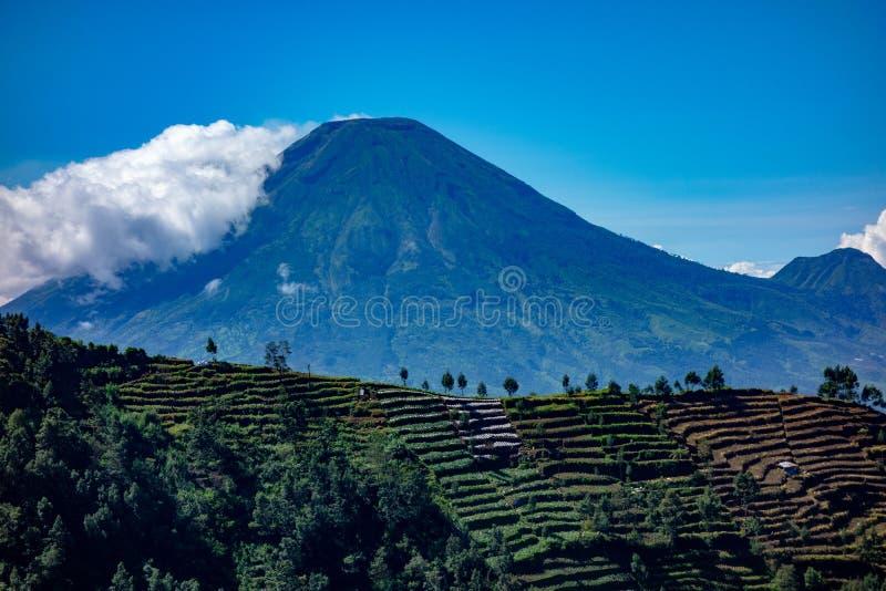 Sundoro山,沃诺索博,中爪哇省,有在前景被运用的农田的印度尼西亚 库存照片