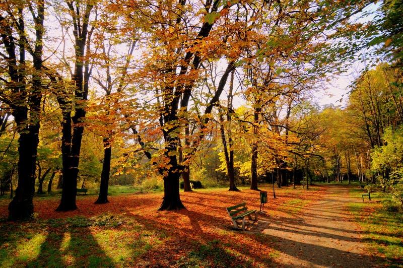 Download Sundown in the fall stock image. Image of imaengine, botanics - 14558611