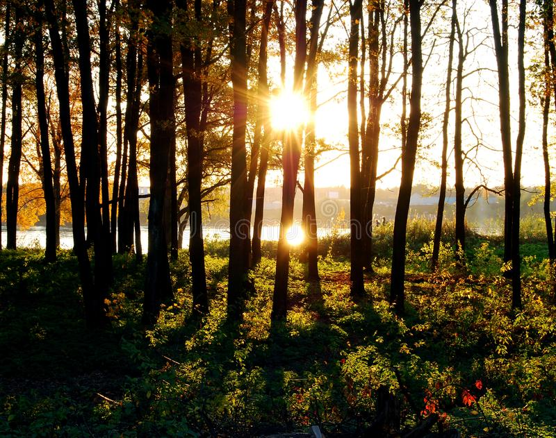 Sundown in a forest royalty free stock image