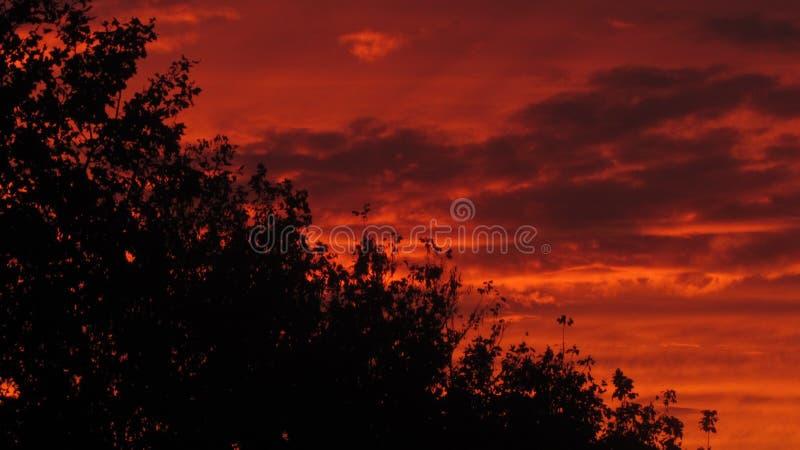Download The Sundown stock photo. Image of window, nature, flowers - 62694216