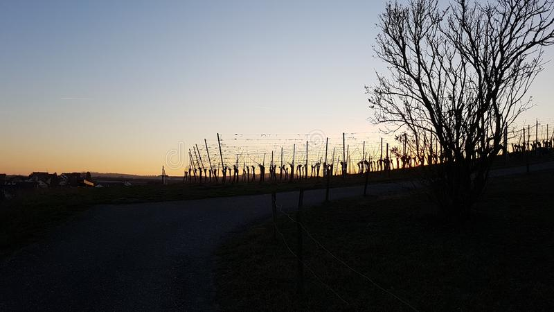 Sundown vinyard. Sundown german vinyard winter black forest stock photos