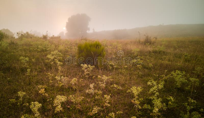 Sundowner in the mist of mountain plateau. In the higher altitudes of the Pla de la Calma plateau of the Montseny mountain range even in midsummer low clouds may royalty free stock photos
