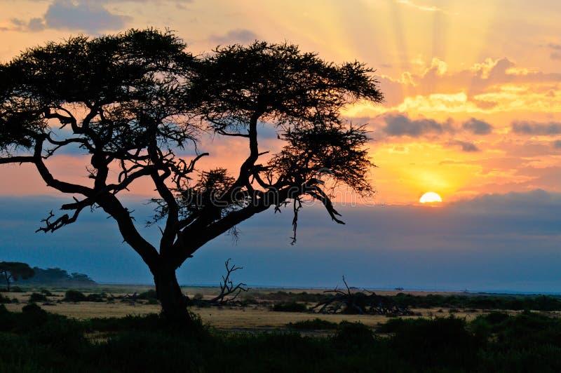 Sundowner royalty free stock image