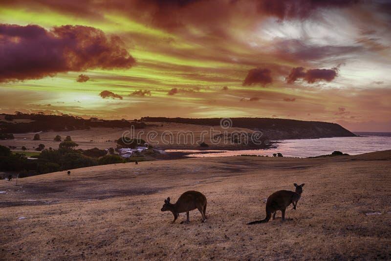 Sunet na ilha do canguru fotos de stock