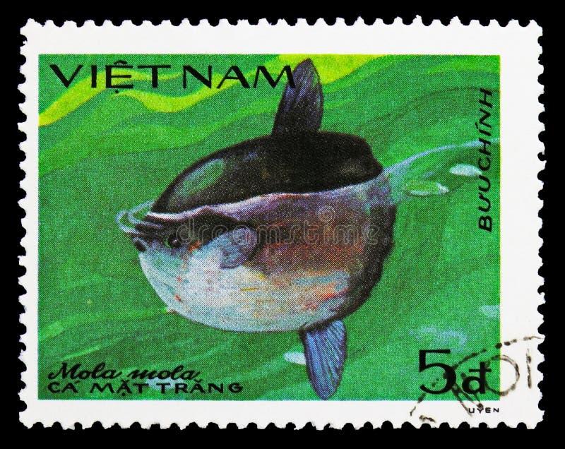 Sunfish d'océan (mola de Mola), serie de poissons, vers 1984 photographie stock