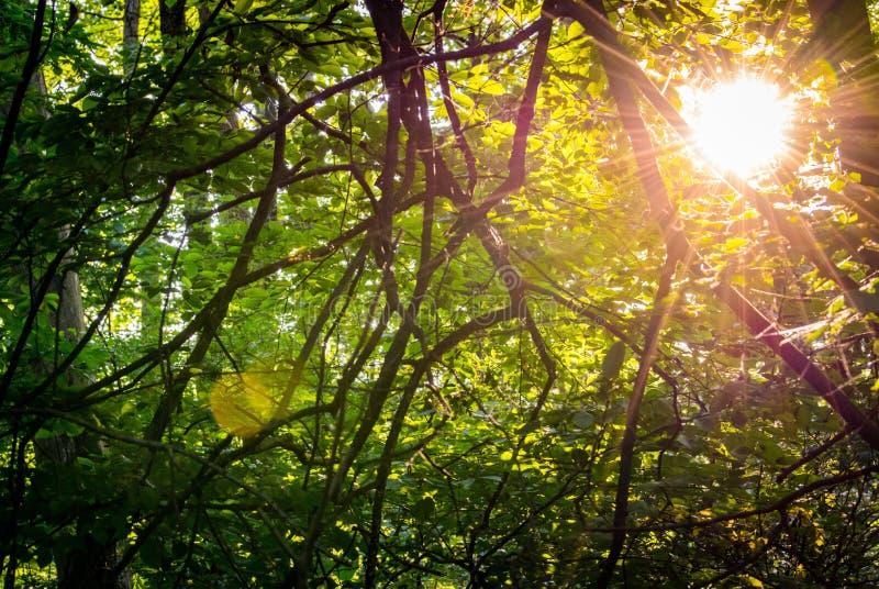 Sunflare fotografia de stock