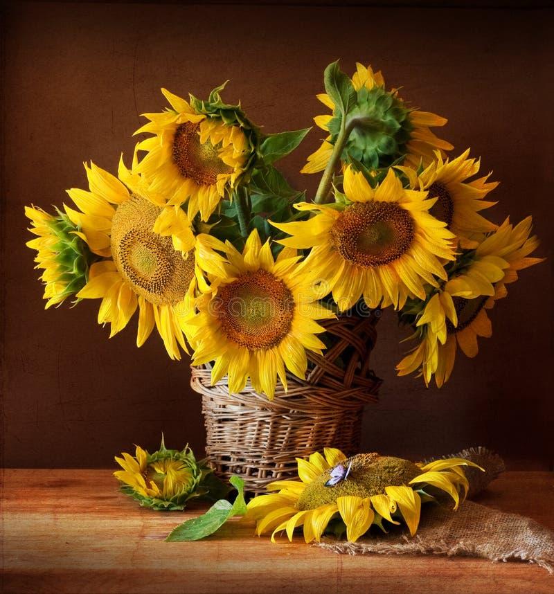 Sunflover image libre de droits