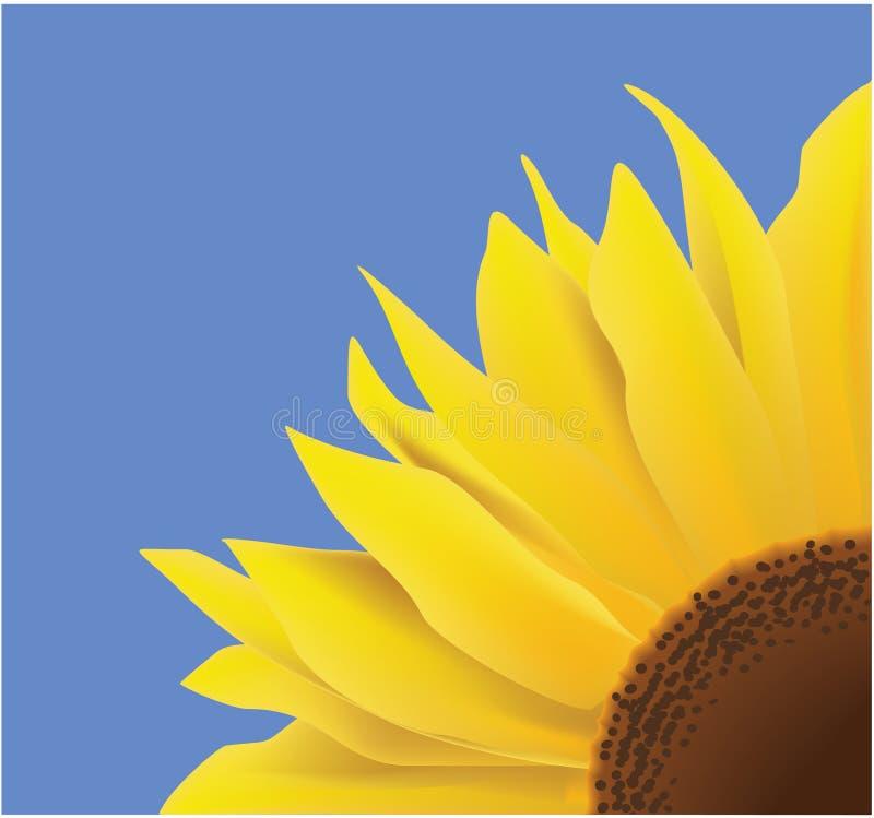 Download Sunflower stock vector. Illustration of green, illustration - 12427009