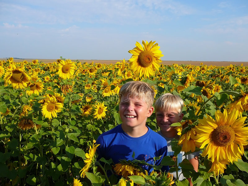 Download Sunflower stock photo. Image of excellent, children, nature - 1410736