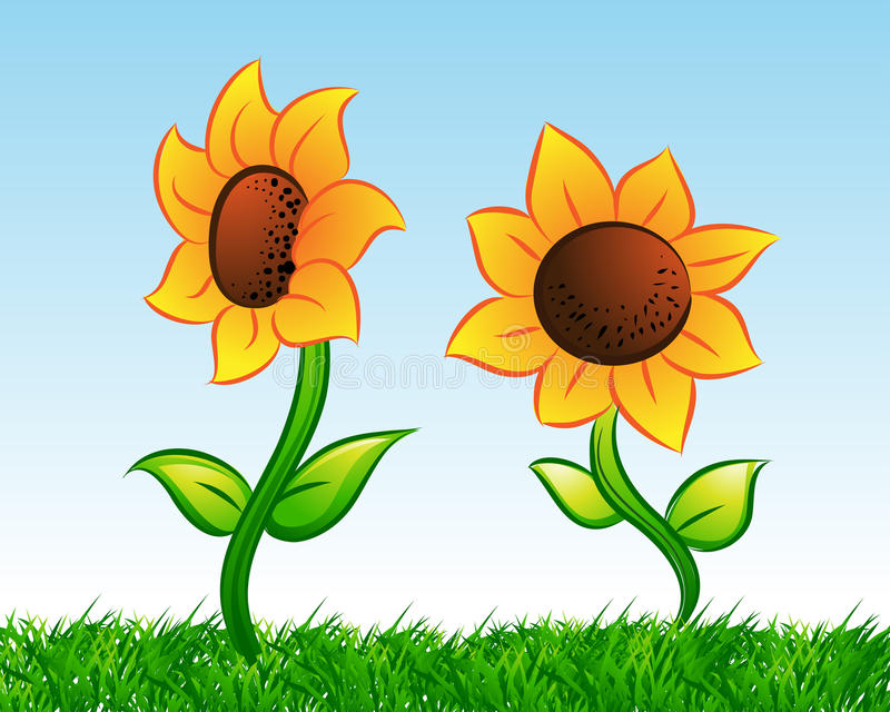 Download Sunflower Stock Images - Image: 15543474