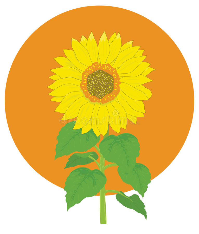 Download Sunflower stock vector. Image of circle, green, blossom - 17328128