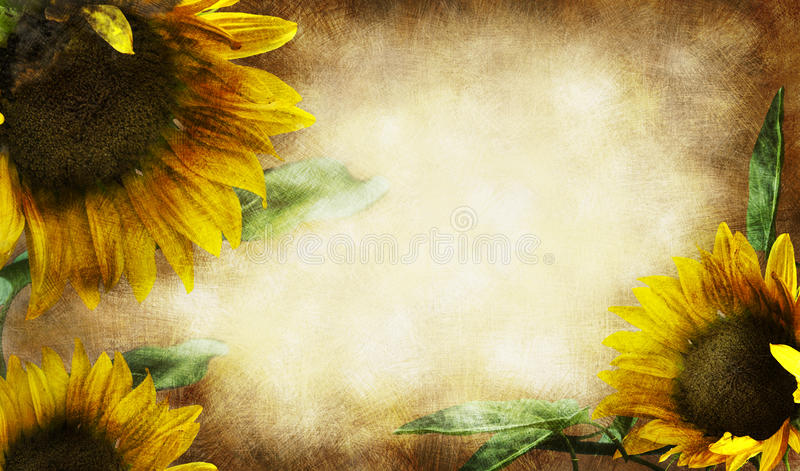 Download Sunflower stock photo. Image of sunflowers, textured - 17965522
