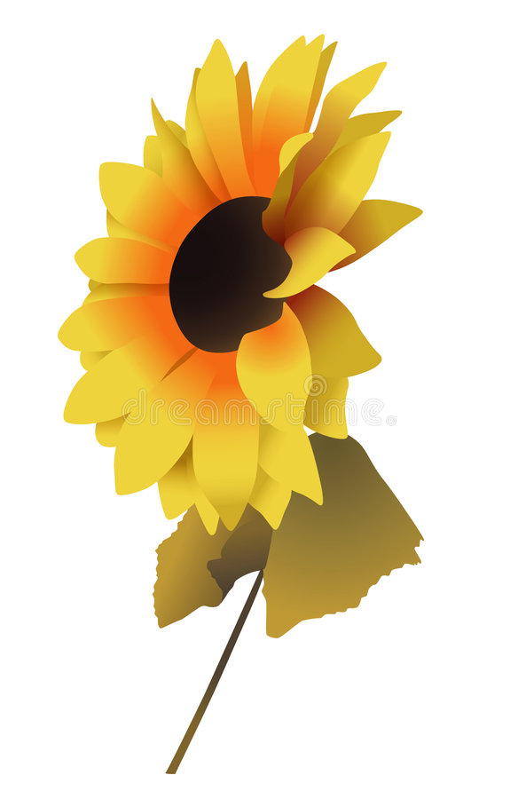 Free Sunflower 2 Royalty Free Stock Photography - 7025677