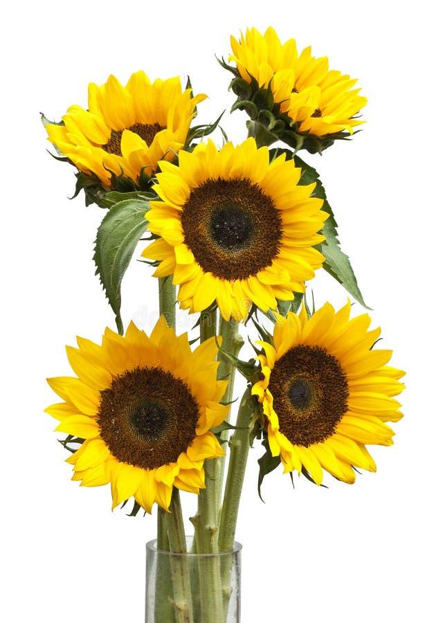 Free Sunflower Stock Photos - 22908303