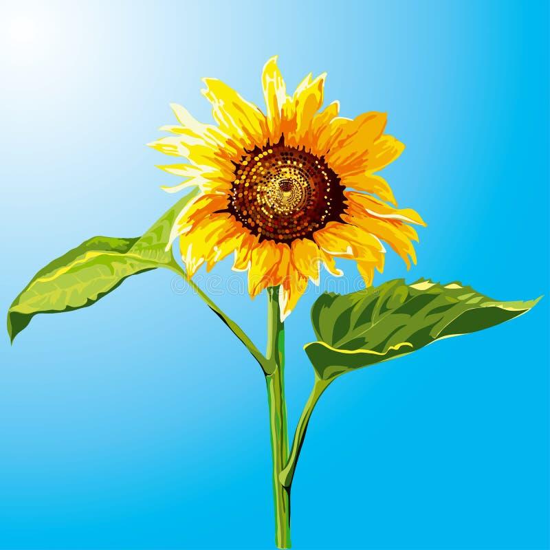 Download Sunflower stock vector. Image of summer, vegetable, flower - 2665210
