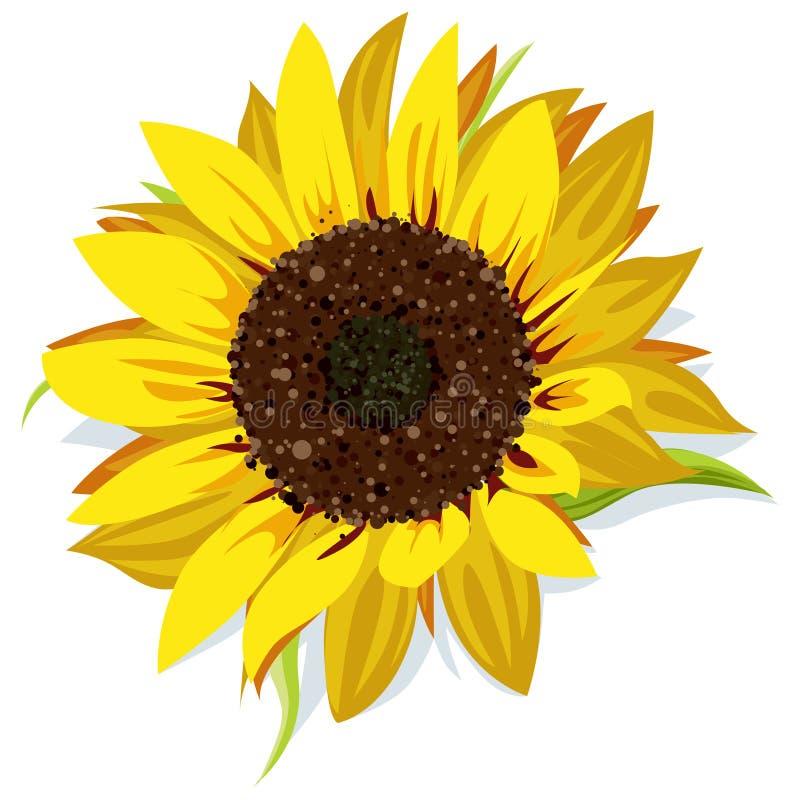 Download Sunflower stock vector. Image of round, pollen, green - 26656630
