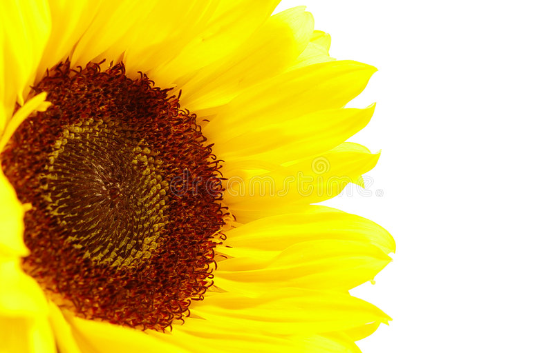 Download Sunflower stock image. Image of close, background, sunshine - 69047