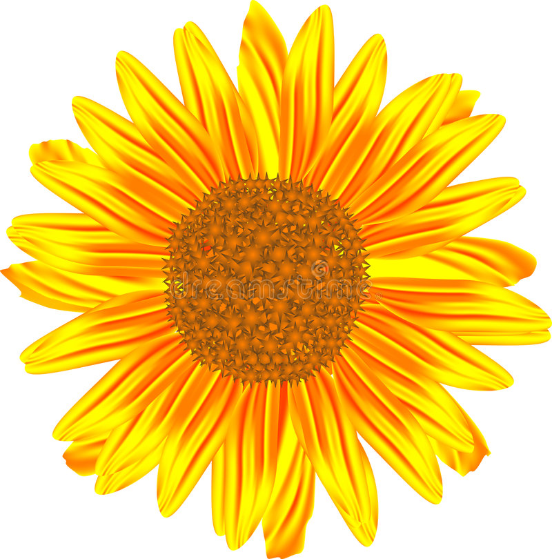 Download Sunflower stock vector. Image of image, beauty, single - 8036595