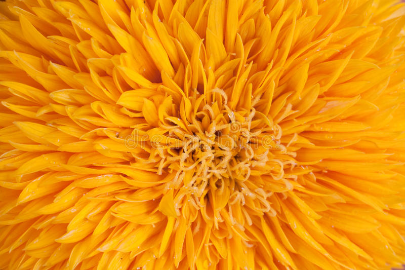 Sunflower abstract royalty free stock image