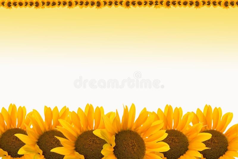 Sunflower background royalty free illustration