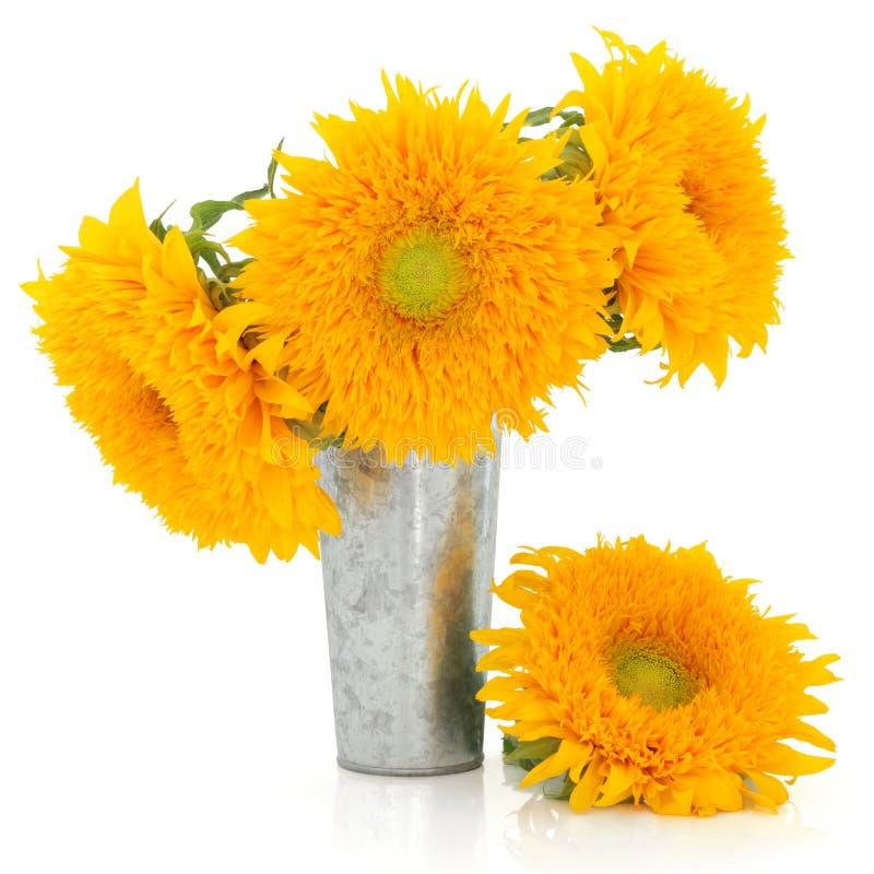 Free Sunflower Beauty Stock Photography - 25922202