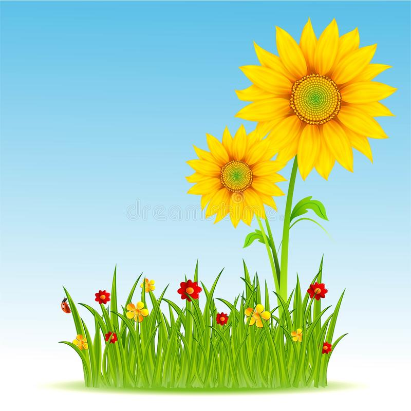 Download Sunflower and blue sky stock vector. Image of field, bright - 20950998