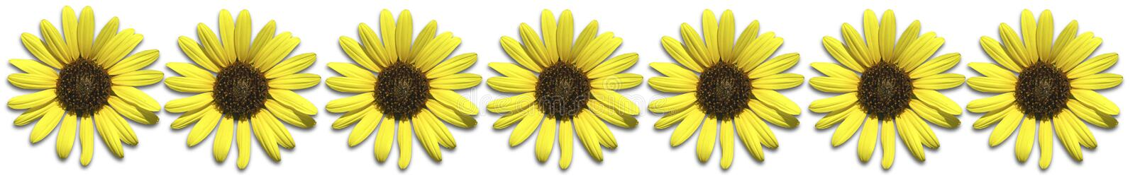 Download Sunflower Border stock illustration. Illustration of bright - 176660