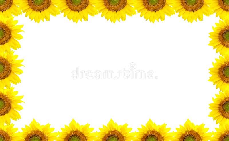 Sunflower Border royalty free stock photos