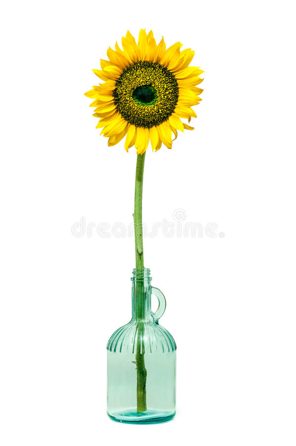 Download Sunflower in a bottle stock image. Image of details, close - 28700753