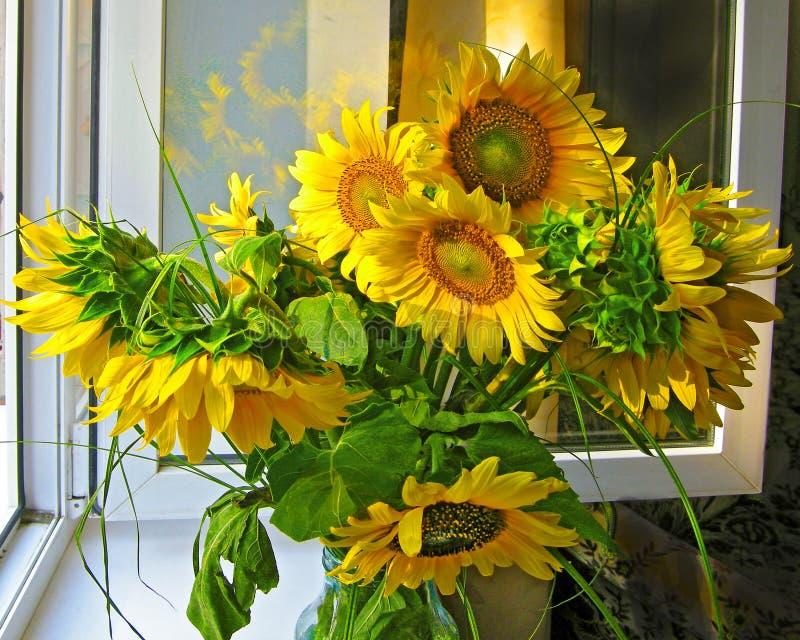 Sunflower bouquet window royalty free stock photos