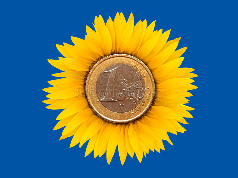 Download Sunflower-coins stock photo. Image of plant, lush, symbol - 18876586