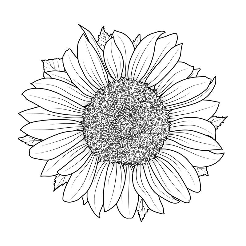 Coloring Page - Flowers | Fall coloring pages, Sunflower coloring ... | 800x800