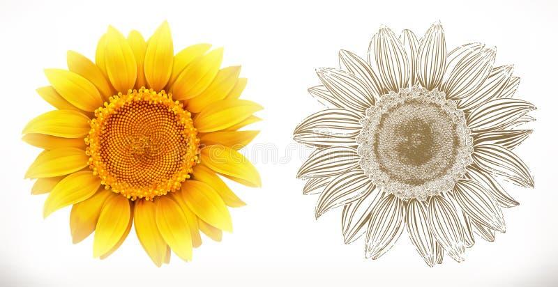 Sunflower. 3d realism. Vector illustration. Sunflower. 3d realism and engraving styles. Vector illustration royalty free illustration