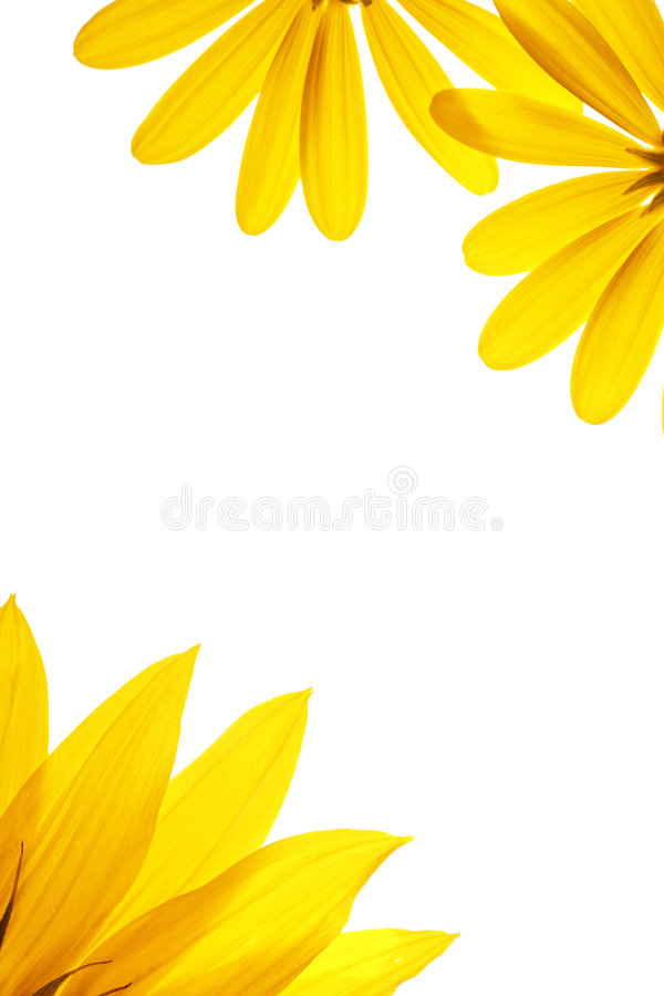 Sunflower details royalty free stock image
