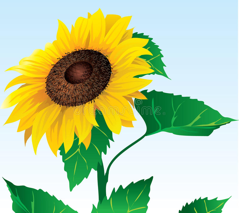 Sunflower.eps illustrazione di stock