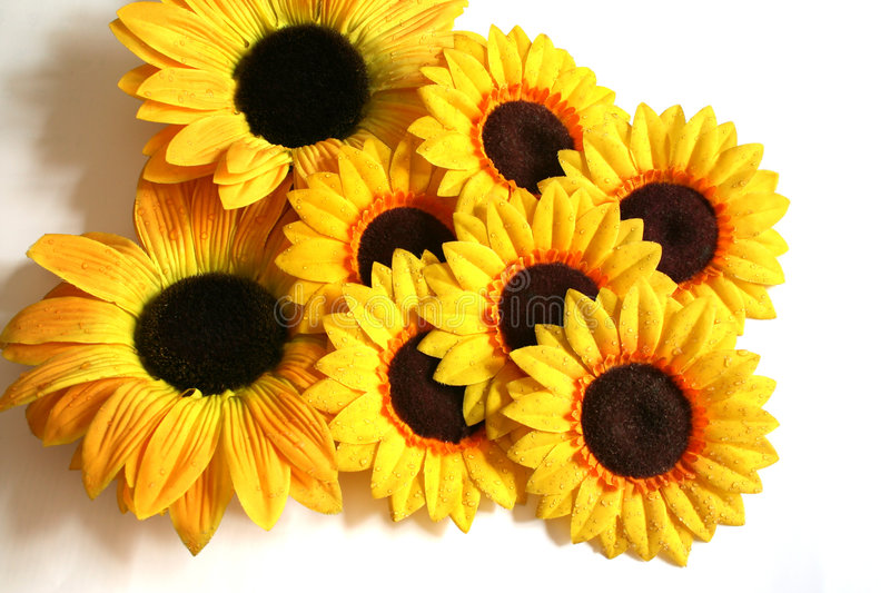 Sunflower Exhibit royalty free stock photos
