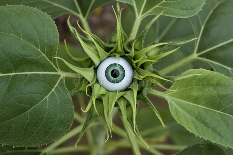 Sunflower Eye stock photos