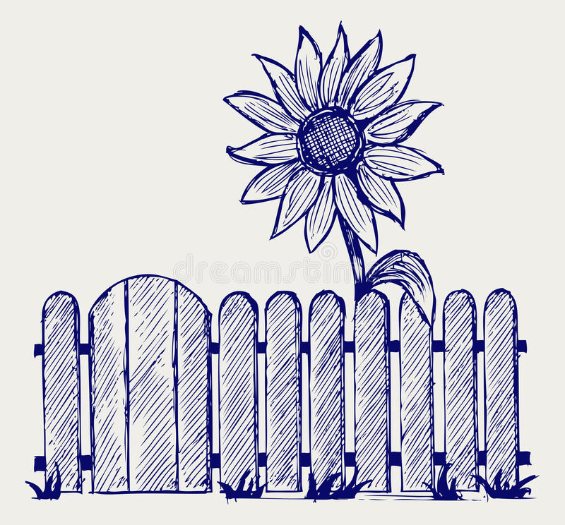 Download Sunflower and fence stock vector. Image of fence, draw - 27927828