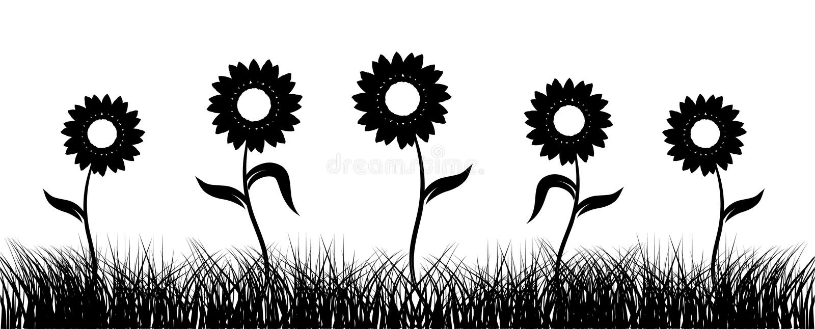 Sunflower on field, black silhouette royalty free stock photography