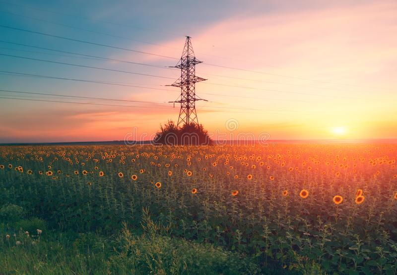 Sunflower field evening landscape with industrial electric supply high voltage pole royalty free stock photo
