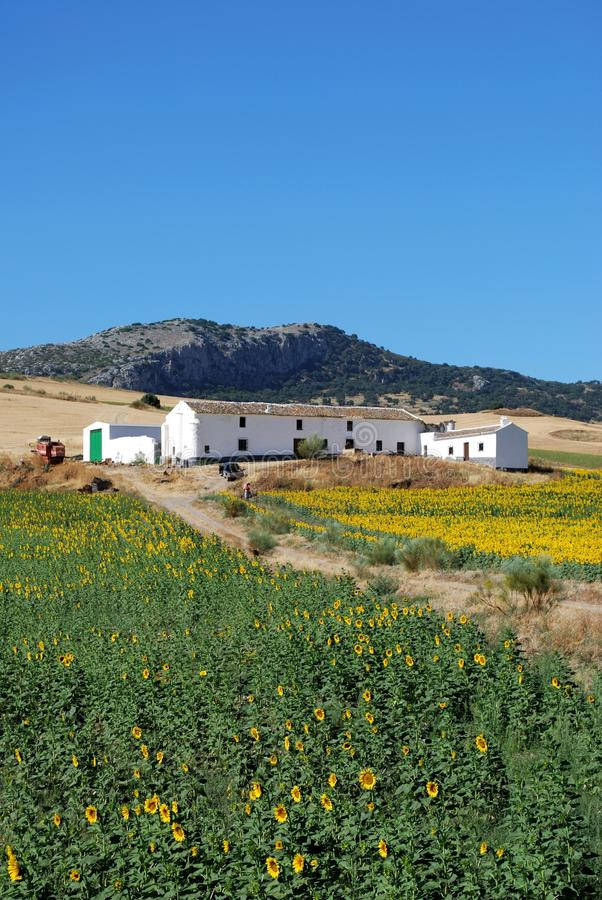 Download Sunflower Field, Andalusia, Spain. Stock Image - Image: 29823647