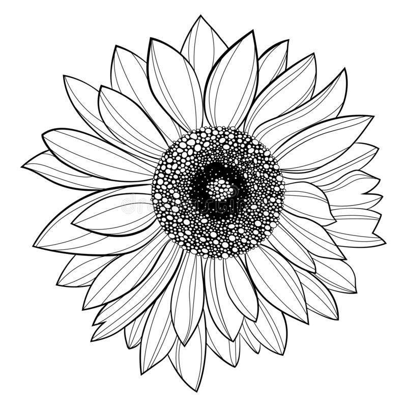 Sunflower Tattoo Stock Illustrations 960 Sunflower Tattoo Stock