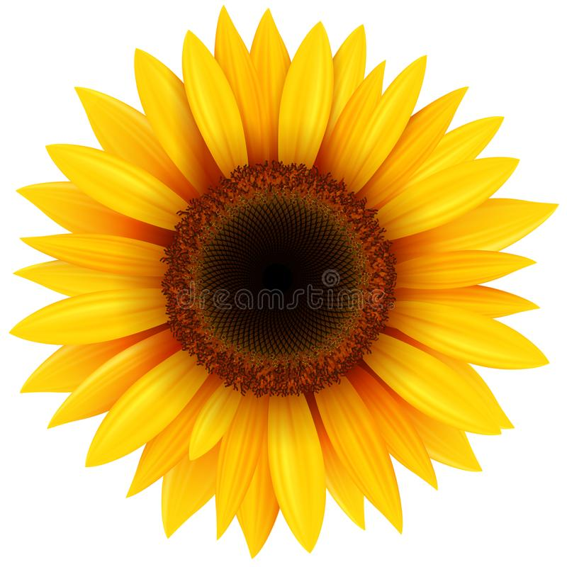 Free Sunflower Flower Isolated Stock Photo - 111244190